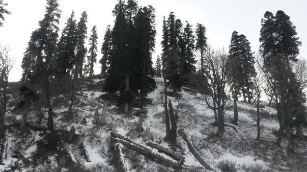 Gulmarg in December
