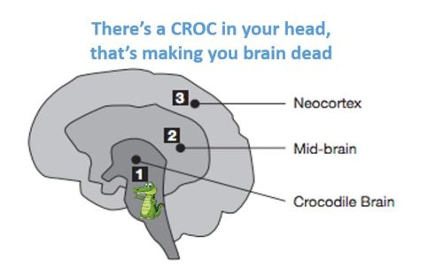 Crocodile Brain